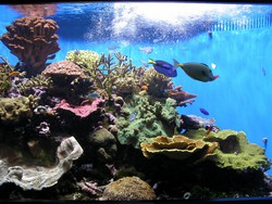 Download Foto Tipp78 Aquarium